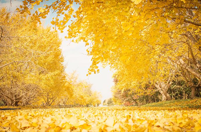 季節の花祭壇11月 公園