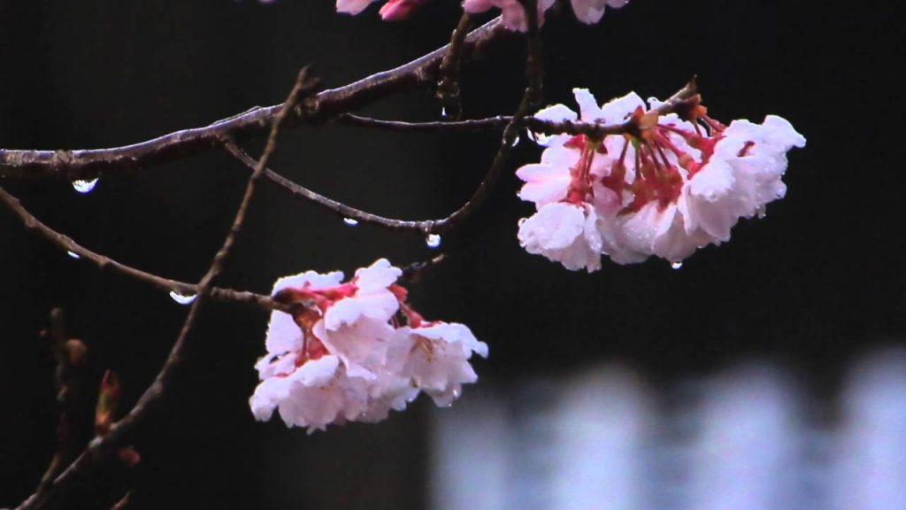 保山耕一カメラマン「奈良、時の雫」から学ぶ【桜】撮影 その3
