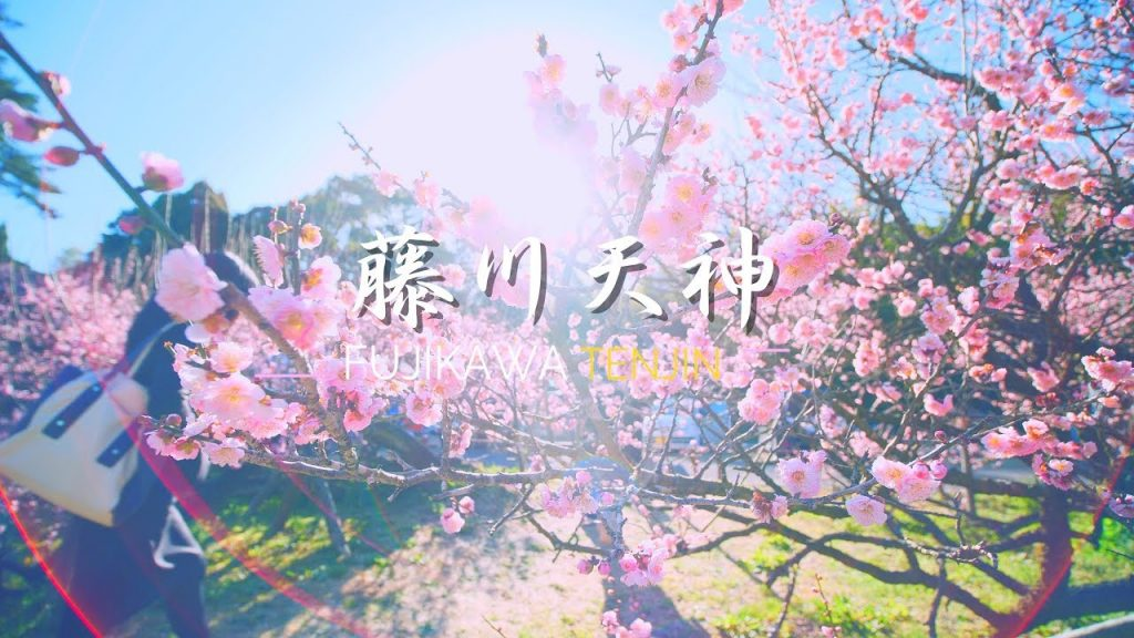 【Views】『藤川天神〜臥龍梅〜』3分23秒〜まるでワルツを踊っているようなカメラワークが印象的な春のスケッチ作品