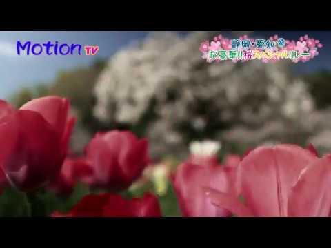 【Views】『静岡・愛知発 桜スペシャル2018』 7分25秒~有名な桜から知る人ぞ知る桜まで、一口解説テロップにのせて駆け抜ける