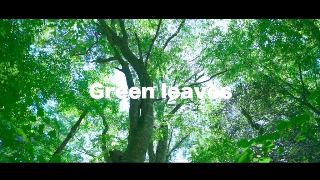 【Views】『Green leaves』1分41秒~大分県の男池園地トレッキングを先導役の奥様とともに堪能