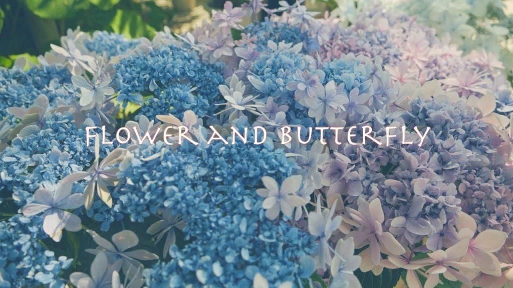 【Views】『梅雨の晴れ間に・・・Flower&butterfly』2分10秒~ファンタジーにも感じる梅雨の晴れ間の1日を描く