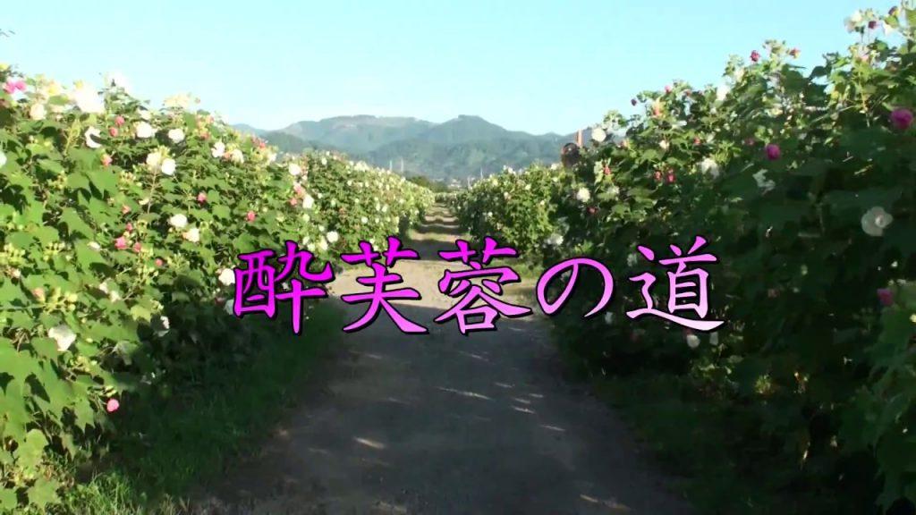 【Views】『酔芙蓉の道』5分27秒~人の酔った顔になぞらえ、時間と共に花の色を変えていく花を描く