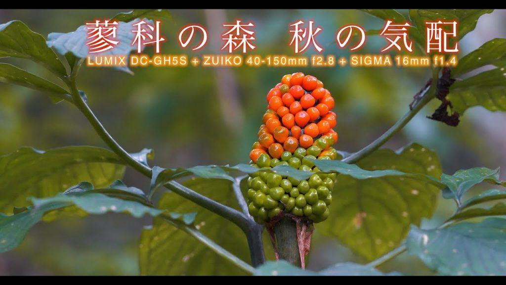【Views】『蓼科の森 秋の気配』4分46秒~人よりも少しだけ早く季節を感じる自然界の営みをミクロの視点から点描