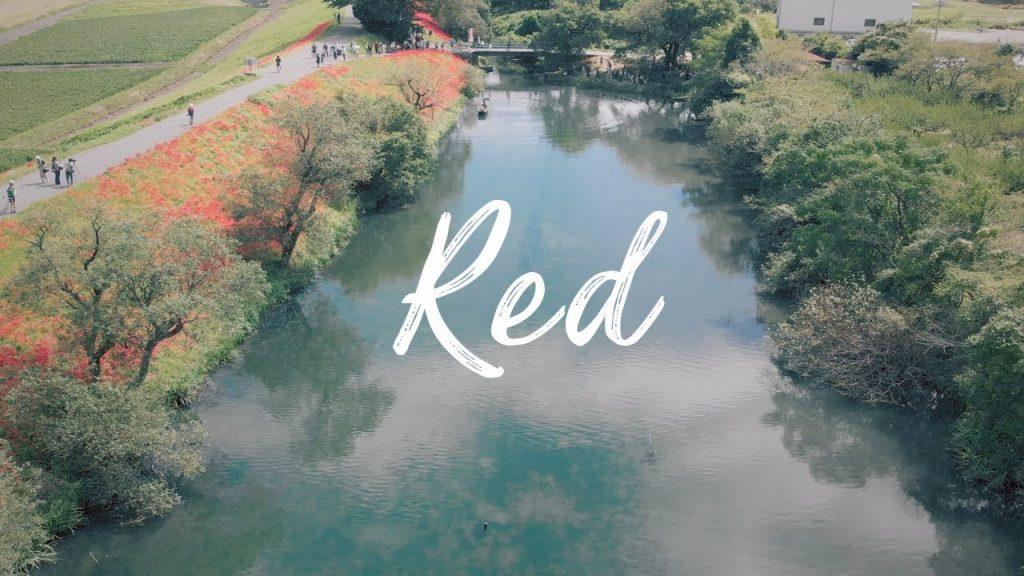 【Views】『Red (津屋川の彼岸花)』1分45秒~最寄りの電車も真っ赤に塗られまさに「赤」の世界観があたりを包む