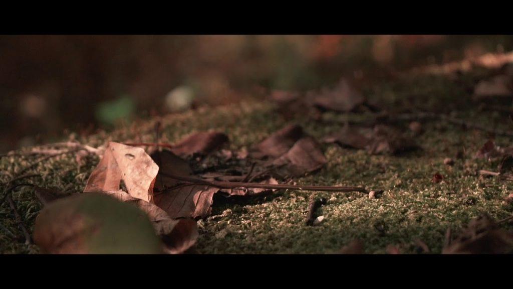 【Views】『Fall of Mt Rokko』2分27秒~神戸のシンボル六甲山の秋を、動くカメラを通して味わう