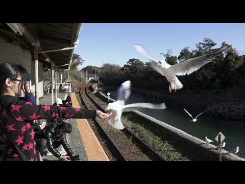 【Views】『カモメの集う駅』4分30秒~時間をかけて駅とカモメを自然に一体化させ、かもめ目当ての集客も果たしたローカル駅を作者の気の利いた演出で軽快に見せる