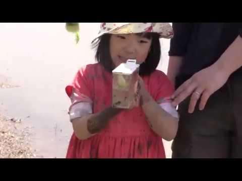 【Views】『江川田んぼ  みんなで田植え』4分44秒〜こうのとり親子と子どもたちの田植えや動物ふれ合いイベントを撮影