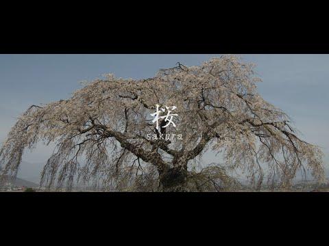 【Views】655『春の絶景 美しい桜』1分6秒~長野県小諸、佐久周辺の桜を地域のアクセントカットを交えて拝む。桜咲く刹那の間にも人の営みは絶えることはない