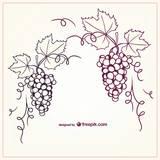 Pinot1013_d
