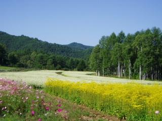 Suekawa walking course (Kaida Kogen highland)