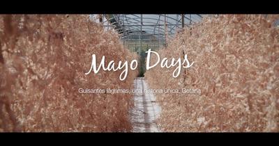 Mayo Days ゲタリア篇