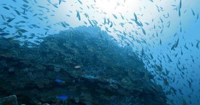 水と海のものがたり - 5分バージョン -