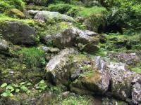 【9/1(土)】多摩の奥 森林の楽校(もりのがっこう)2018