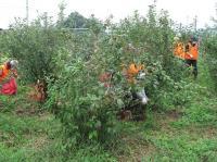 【どなた様も大歓迎です】10月16日(土)日帰り農作業ボランティアを募集