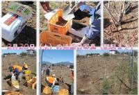 【皆様大歓迎、今年で8年目】4月17日(土) 日帰り農作業ボランティアを募集