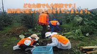 【楽しいひと時を過ごしませんか】11月20日(土)日帰り農作業ボランティアを募集