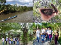 11/19(日)ツキイチカフェ「ボルネオ島の熱帯林破壊と私たちの消費生活の関係」