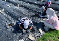 和歌山で援農ボランティア!土に緑に、触れてみませんか? ~広川町 にんにくの植え付けのお手伝い~
