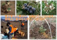 【自然で健やかに、過ごすボランティア】6月19日(土) 日帰り農作業ボランティアを募集