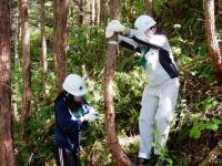 10/17(土)-18(日)開催■森林ボランティア■長野県・赤沢自然休養林