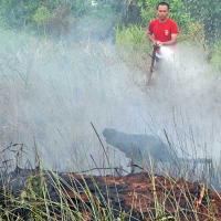 【3/10(土)】セミナー/研究会「インドネシアの泥炭地回復と適正技術」