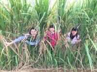 【夏休み】沖縄と鹿児島の文化が混じる不思議な島「与論島」で村おこしボランティア!