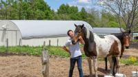 【春休み】馬と火山と人間が共生する! 岩手県八幡平で村おこしボランティア!