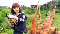 【夏休み】台湾で自然農法を学ぶボランティアに参加しよう!