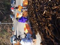 フェローズ・ウィル第78回ワカメ収穫お手伝いボランティア・ツアー参加者募集 3月23~25日