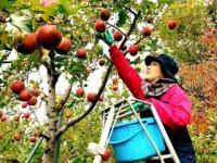 5月9日~10日(土・日) 北信りんごの里 田畑の楽校(はたけのがっこう)2020