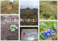 【活動継続中、今年で8年目】5月15日(土) 日帰り農作業ボランティアを募集