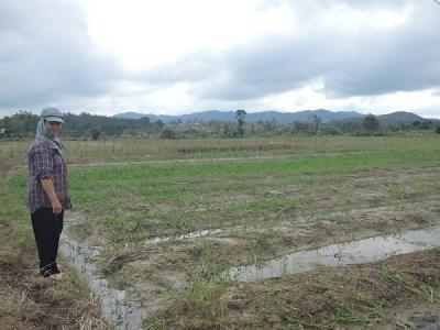 「数十年に一度」といわれた洪水被害 ―ベトナム・フエ市緊急支援活動の...