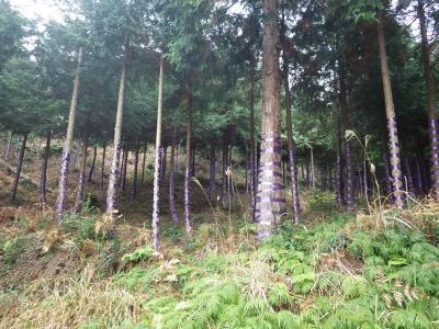 11/28(土)-29(日)開催■豊かな森を残そう!森林ボランティア■滋賀県多賀...
