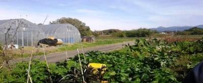 【中止決定】3月21日(土)日帰り農作業ボランティアを募集