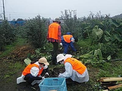 【皆様大歓迎です。】11月20日(土)日帰り農作業ボランティアを募集