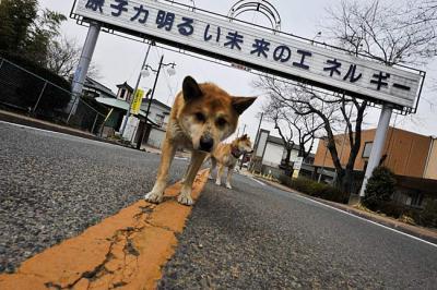 4月19日(金)深夜~21(日) ボラバス「南相馬号」新宿駅発着
