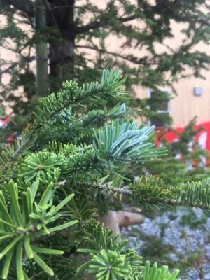 フェローズウィルもみの木基金特別企画:南三陸町上山八幡宮で行われる...