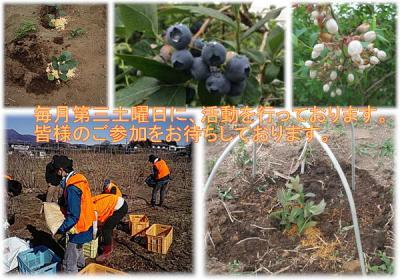 【自然で健やかに、過ごすボランティア】6月19日(土) 日帰り農作業ボラ...