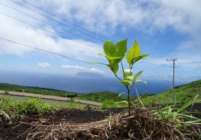 7/3(金)-5(日)開催■三宅島に緑を!植林ボランティア■東京都・三宅島