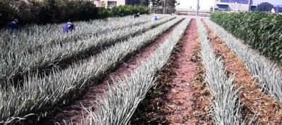 【初めての方も大歓迎】2020年2月15日(土) 日帰り農作業ボランティアを...