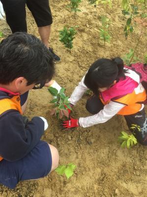【緊急募集!】岩沼市千年希望の丘 海の見える植樹祭 ボランティア参加...