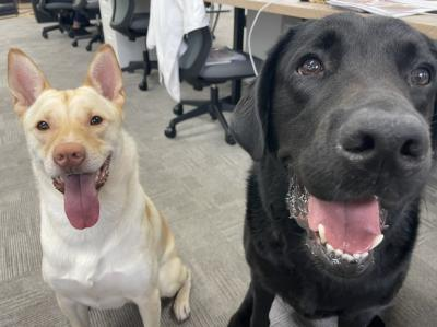 人とペットの幸せのために!保護犬のトリミングをしていただける方募集!
