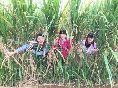 【夏休み】沖縄と鹿児島の文化が混じる不思議な島「与論島」で村おこし...