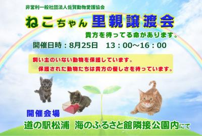 猫ちゃん譲渡会開催します。