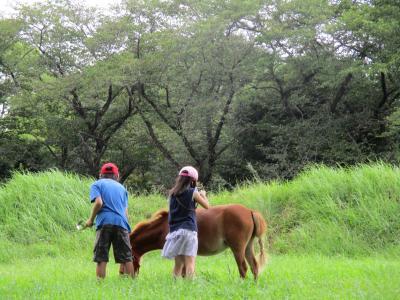 【正職員募集!!】障がいのある子どもたちとポニー飼育や畑作りの体験...
