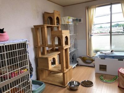 保護猫シェルタースタッフ&カフェスタッフ募集中!