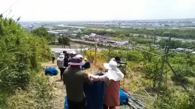 2019年6月15日(土)  農業ボランティア日帰り活動の募集