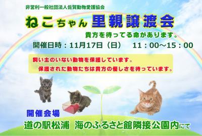 ネコちゃん譲渡会 11月17日(日)開催 道の駅松浦 海のふるさと館隣...