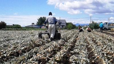 【初めての方も大歓迎】2020年6月20日(土) 日帰り農作業ボランティアを...